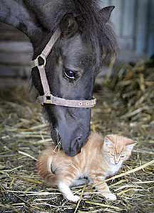 cheval-calin-chat.jpg