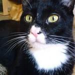 Beau-Booba-le-chat1