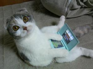 Chat gamer DS-Lite.jpg