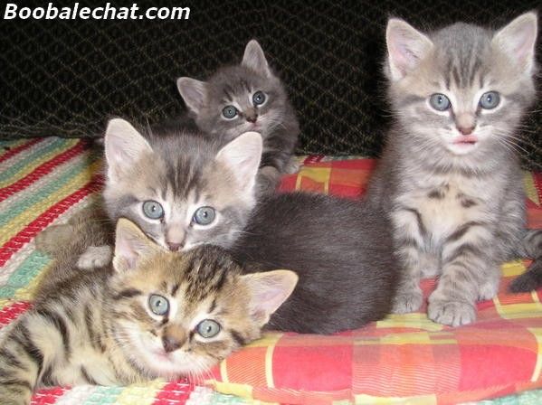 photo-chatons-5-semaines.jpg
