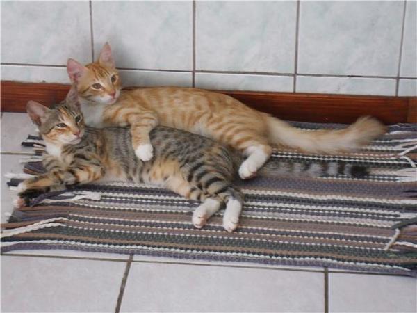 Chouchou et Grisouille ,chats du bout du monde.jpg