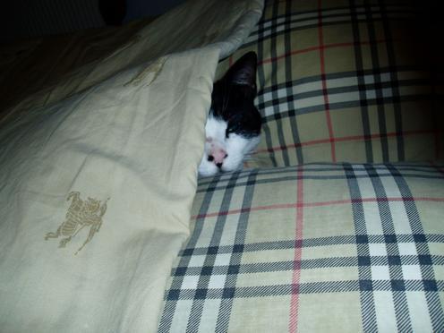 chat-dans-le-lit.jpg