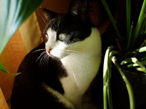 photo-chat-noir-blanc.jpg