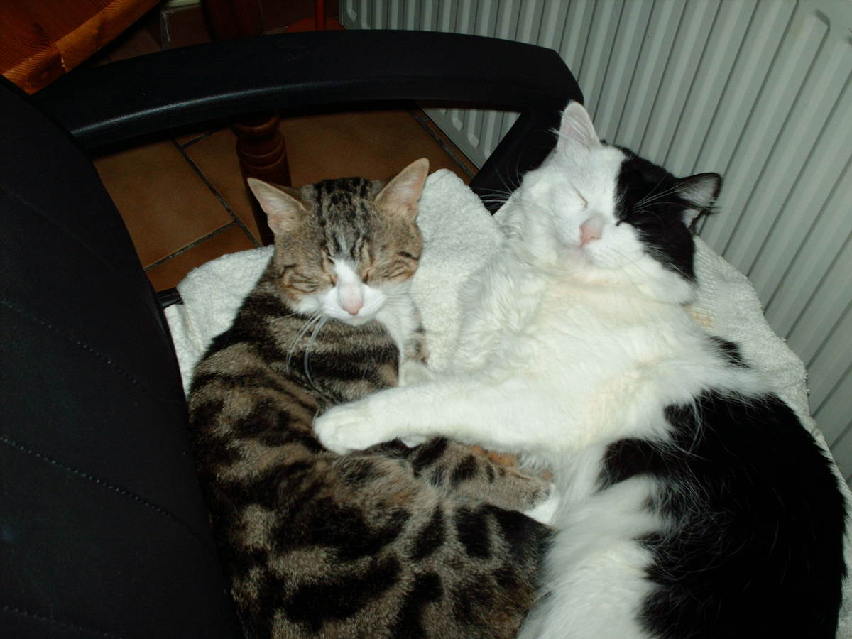 photo-calin-chat.jpg
