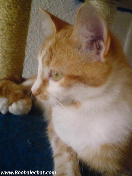 couscous-chaton-roux.jpg