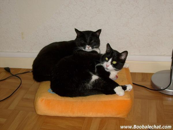 photo-2-deux-chat-font-calin.jpg