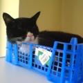 photo-chat-dort-dans-cagette2