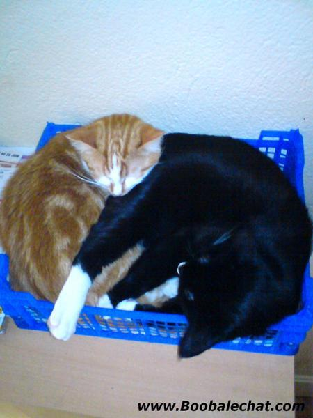 photo-2-deux-chat-font-calin.jpg