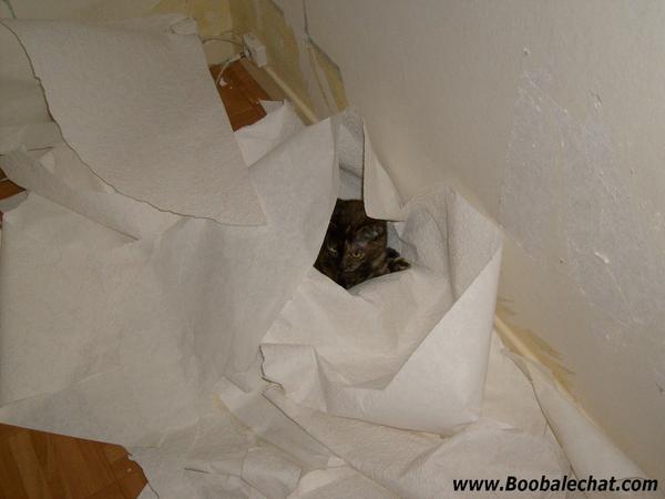 chat-joue-papier-peint.jpg