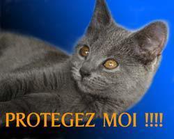 beau chat.jpg